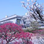 梅と国際会館