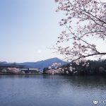 桜と国際会館
